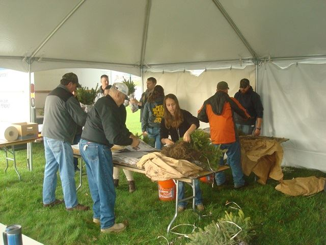 Staff and volunteers bundling tree seedlings for the tree sale