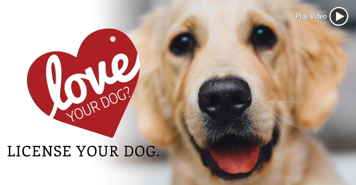 Click here to watch the License Your Dog video presented by the Bureau of Dog Law.